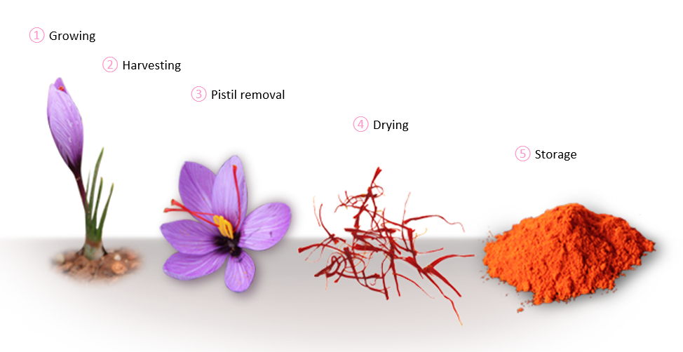 saffron-from-flower-to-plate